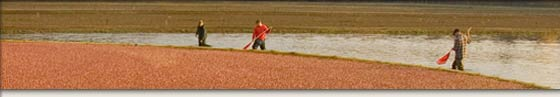 Wisconsin Cranberry Growers